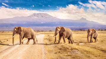 elephants in South Africa