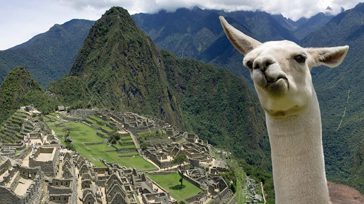 A llama stands in the foreground at Machu Picchu, Peru.