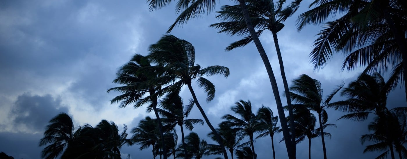 palm trees in a natural disaster storm