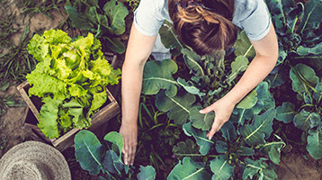 A woman works in a vegetable garden