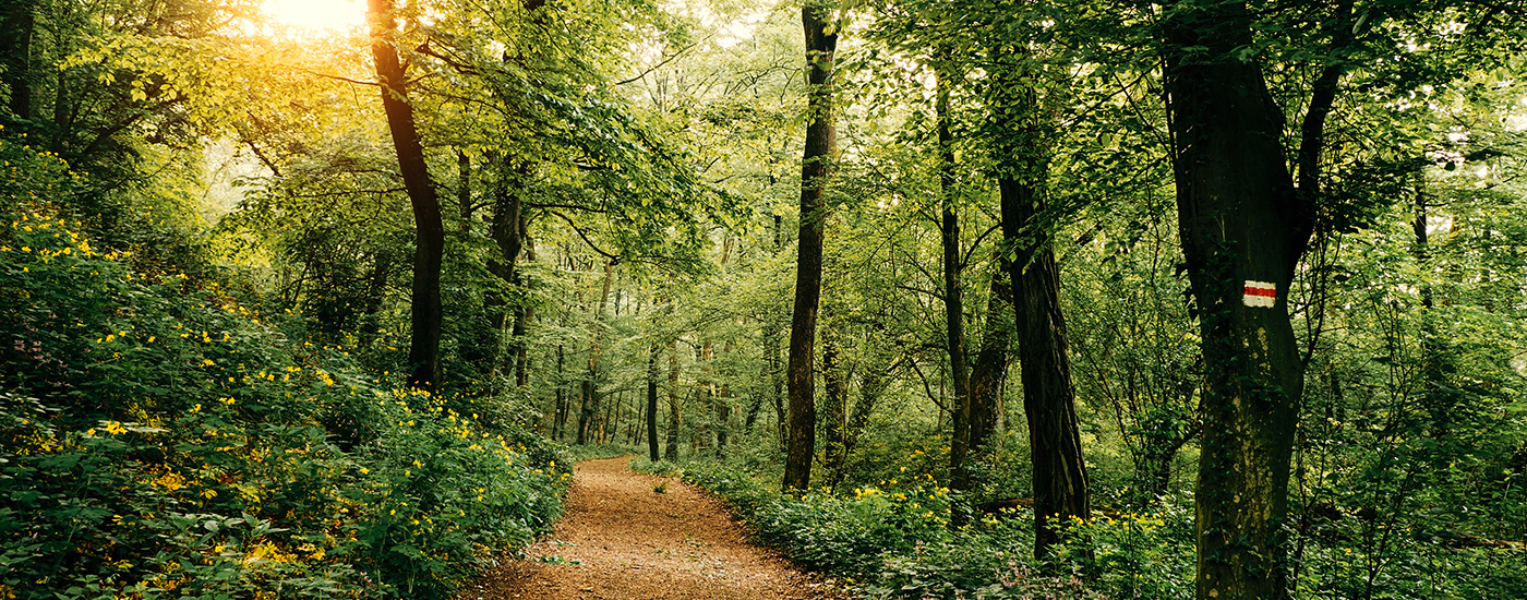 A winding path through the woods.